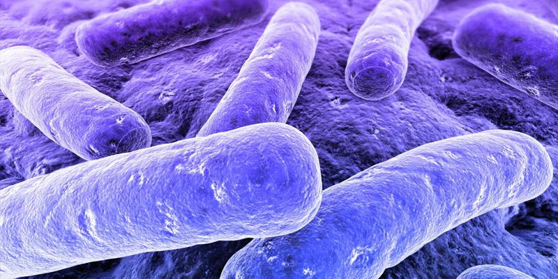 img_bacterias